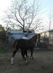 Noble leading me to the barn upon arrival at his new home.