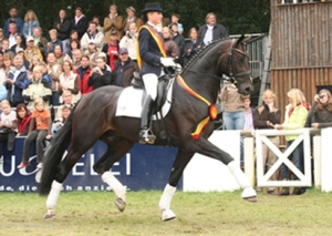 At just three, this stallion is already showing a dropped back and an out of synch gait