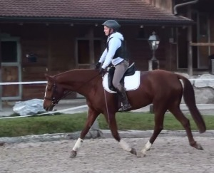 A more proper frame for the first year of a young horse's under saddle education