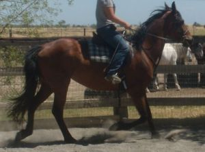Tally under saddle with the trainer, not long before coming home