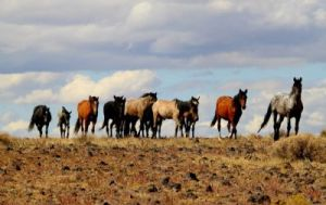 "There is no evidence that the positions of these horses mean anything about their ""position"" in the herd"
