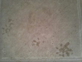 Paw prints gave me a clue to the identity of our night time visitor