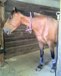 """Tally in a nice """"Stay"""" before bridling (and catching a yawn, while she's at it!)"""