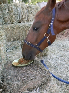 "Noble and his ""birthday cake"" - a mix of oatmeal, molasses, apples and carrots ... of which he only ate the carrots!"