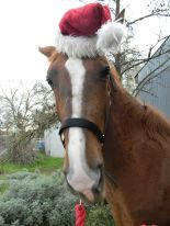 Noble has come a long way from attacking when I'd approach to letting me put silly hats on his head!