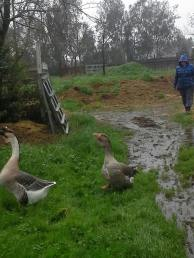 Last weekend's weather was better suited to goose activity than horse activity