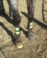 Nash's fancy boot does nicely as a shoe substitute!