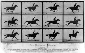 One of many studies in motion done by Muybridge, giving us insight into what our eyes might miss.