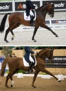 "Two top horses that apparently are ""mechanically"" different from other horses."
