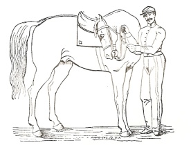 "One of the images from Baucher's work.  Even the artist couldn't make the horse look happy with this ""exercise"" in flexion!"
