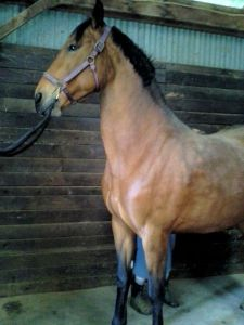 Tally enjoying a good scratch to get rid of that winter hair!