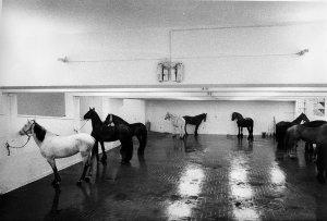 "The original Italian ""installation"" by Kounellis"