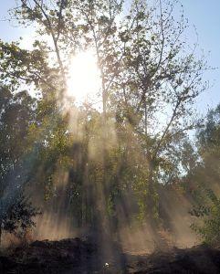The sun through the vast dust cloud raised by our boys.