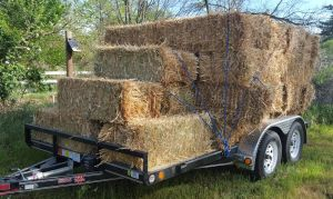 New trailer and the first load of hay!