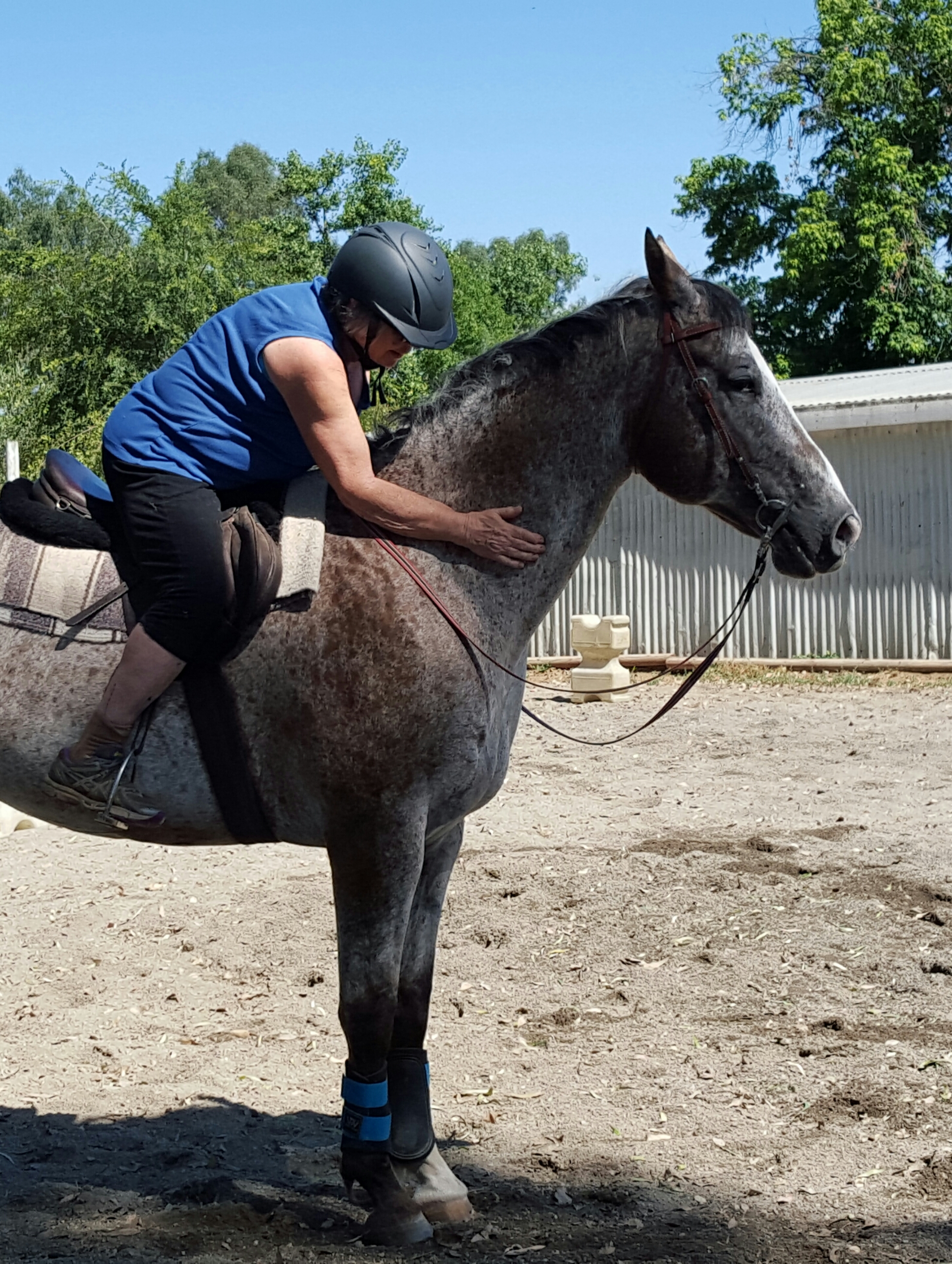 Training an Appaloosa | Horse Crazy Once Again