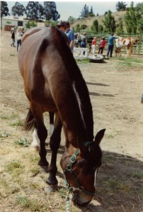 Ricky, 3, acting as Mustang ambassador at an adoption, just before the crowds surrounded him.